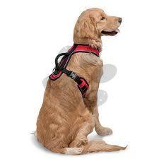 Postroj pre psa na prechádzky